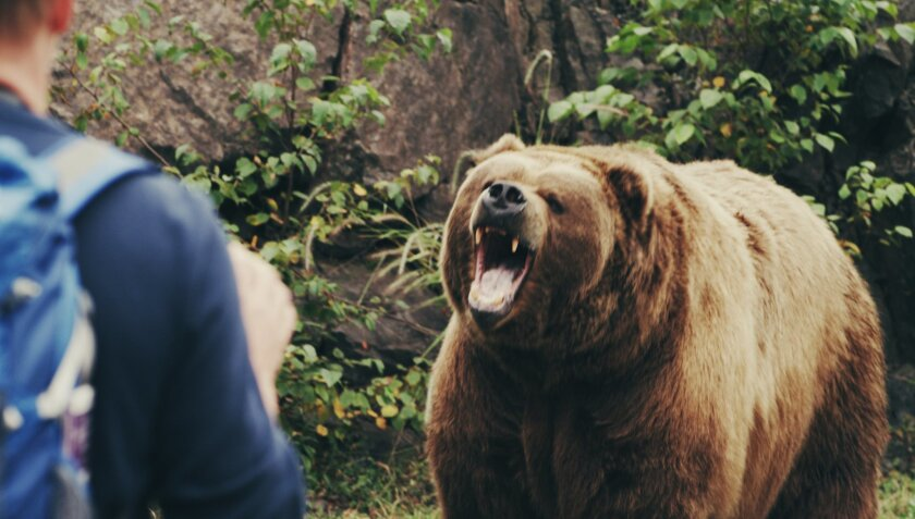 """A new ABC TV two-hour docudrama, """"In An Instant: Grizzly Bear Attack,"""" airs March 14 at 9 p.m.  Johan Otter and daughter, Jenna, were celebrating her graduation with a hike in Glacier National Park when they came upon  a grizzly bear. (FRAME GRAB FROM COMMITTEE FILMS)"""
