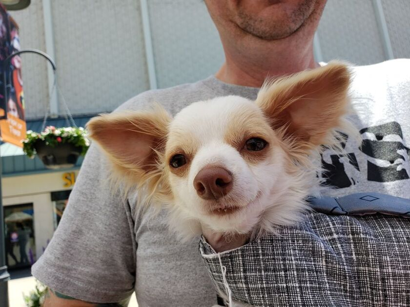 Dogs like this one will be available to meet at an adoption event Saturday at Grossmont Center.
