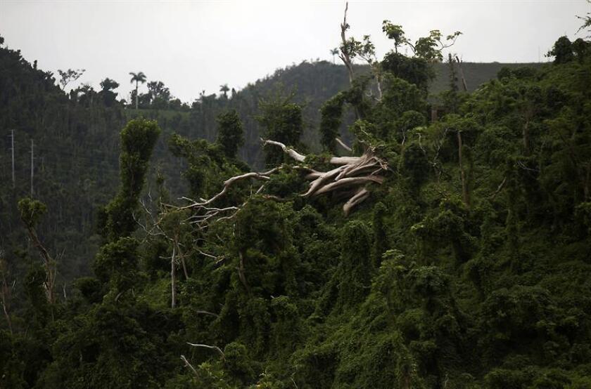 La flora y fauna de Puerto Rico, un año después del paso de María, mejoran de los estragos provocados por el histórico huracán que arrasó la isla caribeña provocando graves daños ambientales y materiales. EFE/Archivo