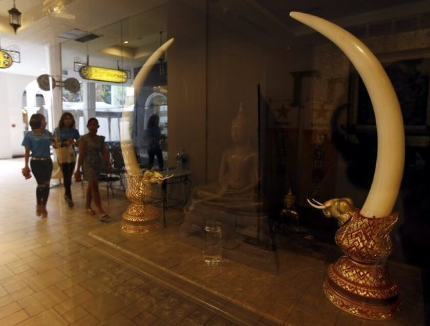 Thriving illicit ivory trade decimating African elephant herds