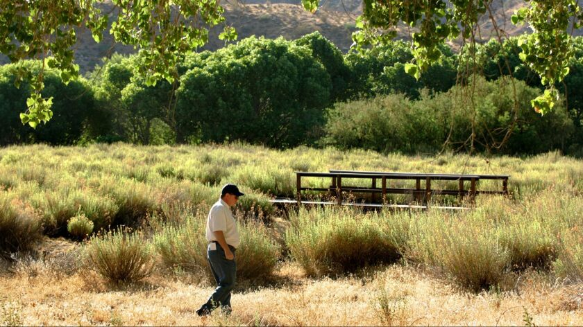 Nonnative cheatgrass, which increases the chance of wildfire and allows a blaze to spread more swiftly, grows at Big Morongo Canyon Preserve near Joshua Tree.