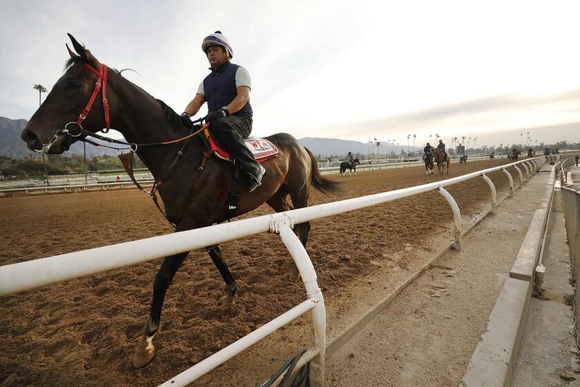 Riders, jockeys and horses train at Santa Anita Park on March 11.