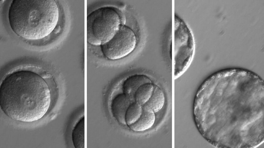 A composite photo made available Thursday shows the development of embryos after the injection of a gene-correcting enzyme and sperm from a donor with a genetic mutation.