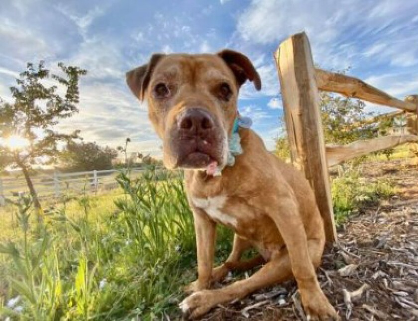 Senior pupster Story seeks a forever home.