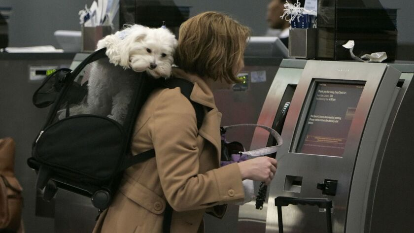 A passenger checks in for her flight with her dog in tow at O'Hare International Airport in 2005. A survey of nearly 5,000 flight attendants found that most flight attendants have seen disruptions caused by animals.