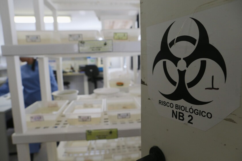 Aedes aegypti and other mosquitos are contained in a lab at the Fiocruz institute in Brazil. The Aedes aegypti mosquito transmits the Zika virus and is being studied at the institute.