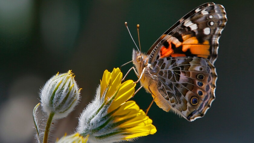 A colorful butterfly perches on a yellow flower.