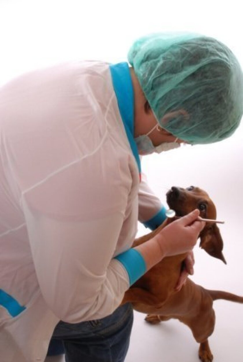 Anesthesia helps ensure safe, effective veterinary dental care.