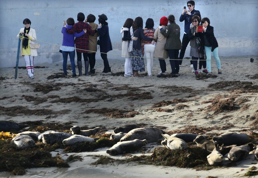 On Tuesday, a group of tourists descended on the beach to see the seals at the Children's Pool beach in La Jolla.  The San Diego City Council postponed a vote on a seasonal closure of the beach to address revisions requested by the California Coastal Commission, which must also approve the closure.