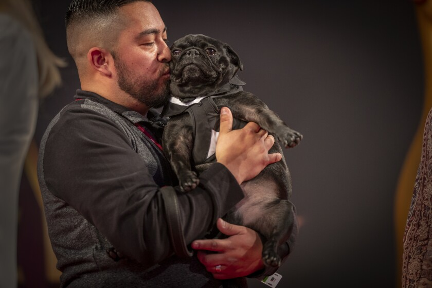 Ray Castaneda, of Covina, kisses his pug Ninja Nate at the Kennel Club of Beverly Hills Dog Show in Pomona on Feb. 29, 2020.