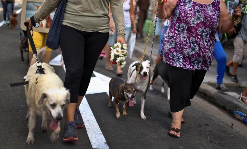 Mujeres participan con su mascota en una caminata. EFE/Archivo