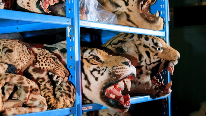 """An aisle full of various """"cats"""" inside the U.S. Fish and Wildlife Service National Wildlife Property"""