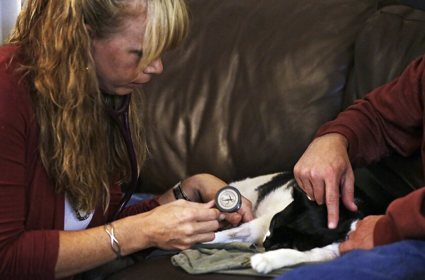 In this photo taken on Nov. 9, 2013, Mike Kelley, right strokes his cat Andy as veterinarian Dr. Mary Gardner uses a stethoscope and finds no heartbeat after she euthanized the animal at Kelley's home in Newport Beach, Calif. A few weeks earlier, 10-year-old Andy didn't greet Kelley at the door as usual and was soon diagnosed with liver disease, which meant euthanasia. It happened with the help of Gardner, co-founder of Lap of Love Veterinary Hospice, the country's first organized network of veterinarians who provide hospice and end of life care in the pet's home. (AP Photo/Reed Saxon)