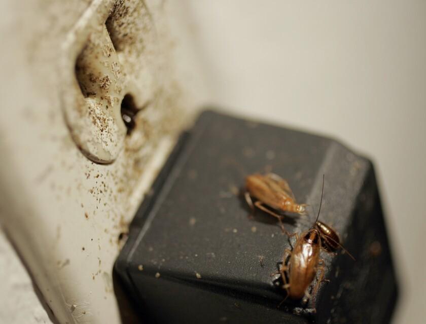 Las cucarachas, ratones y moscas han causado el cierre temporal de un promedio de 6 negocios de comida diario en todo el Condado de Los Ángeles, entre el 1 de enero y el 29 de septiembre de 2016.