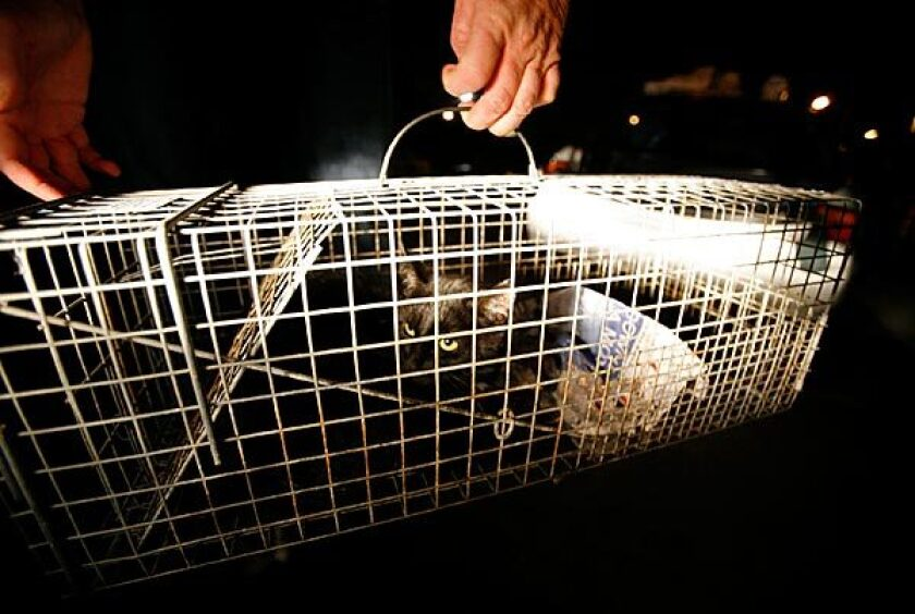 Programs that trap, neuter and release feral cats aren't curealls.