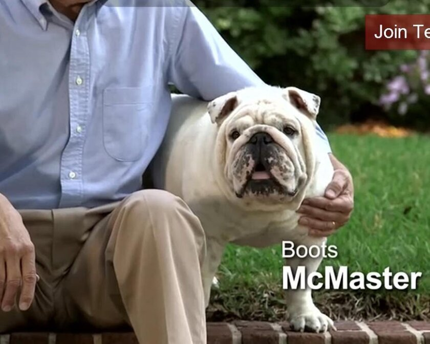 This Aug. 27, 2014 photo from from a broadcast ad shows Boots McMaster, the bulldog owned by Henry McMaster the Republican who is running for South Carolina lieutenant governor, in Charleston, S.C. With dogs in almost half of American homes, a number of South Carolina political candidates this year are featuring the family pet dog in ads, on web sites and on Facebook pages. College of Charleston political scientist Gibbes Knotts says such ads help to humanize a candidate but probably are not that effective in winning votes. Ads that contrast candidates - negative ads - tend to work better, Knotts says. (AP Photo/Bruce Smith)