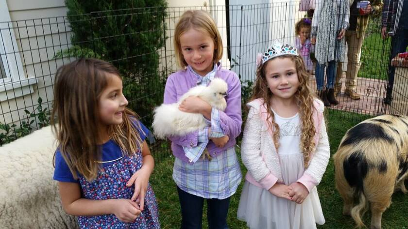 Kids enjoy a local Pammy's Pony Parties and Petting Zoo event.