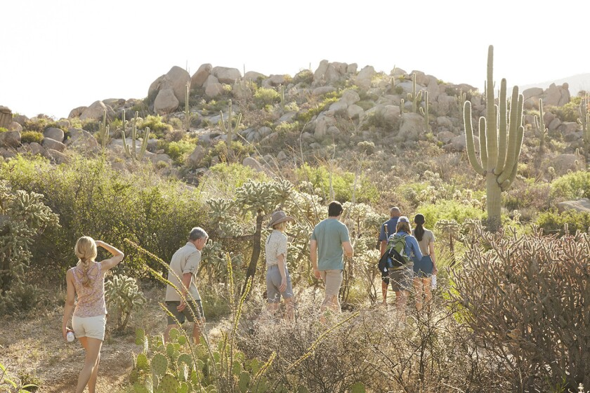 For the rugged, Miraval offers wilderness hikes in the Arizona desert