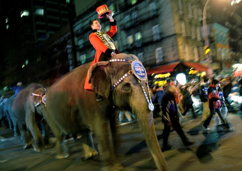 In this March 19, 2008 file photo, elephants from the Ringling Bros. and Barnum & Bailey Circus walk through the streets of Manhattan on their way to Madison Square Garden in New York. Most circuses have phased out elephants from its performances. (AP Photo/Seth Wenig)