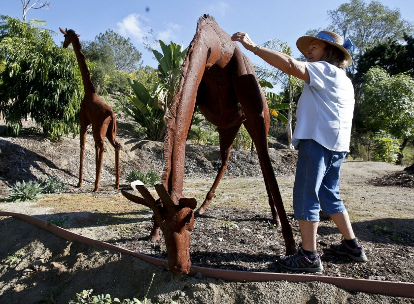 Nancy B Jones, who works as the director of children's programs at the Alta Vista Botanical Garden at Brengle Terrace Park in Vista, reaches for the neck of this giraffe sculpture by artist Ricardo Breceda that has recently been installed at the garden.  Photo by Don Boomer