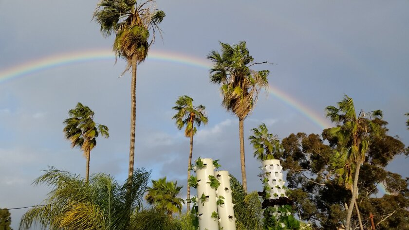 Three Garden Towers, blend in with vegetation at So Cal Urban Farms in San Diego's University Heights neighborhood.