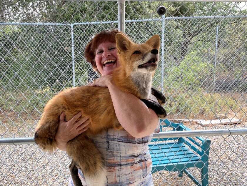 Annie Petersen films a video for her Animal Bond Academy YouTube with a fox.