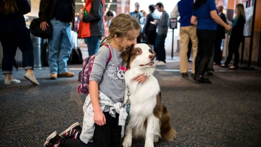 In a Nov. 30, 2017 photo, Savannah Ford, 7, of North Franklin, Conn., gives therapy dog James, an Au