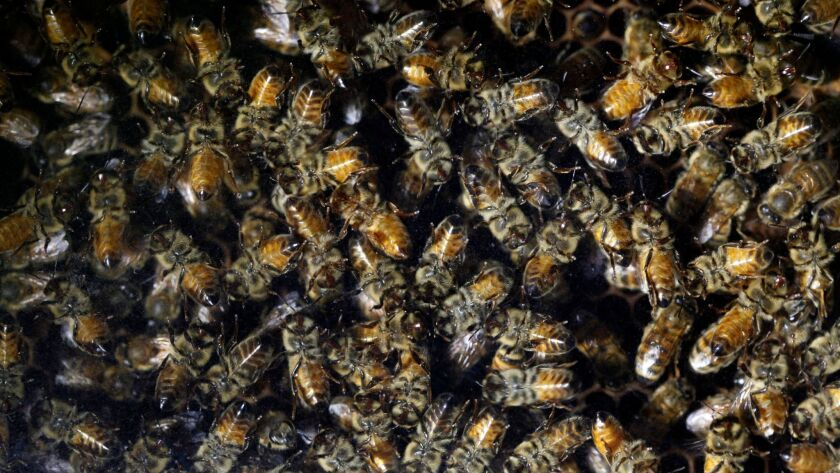 The U.S. Environmental Protection Agency said Thursday that three pesticides linked to bee deaths are safe in most uses.