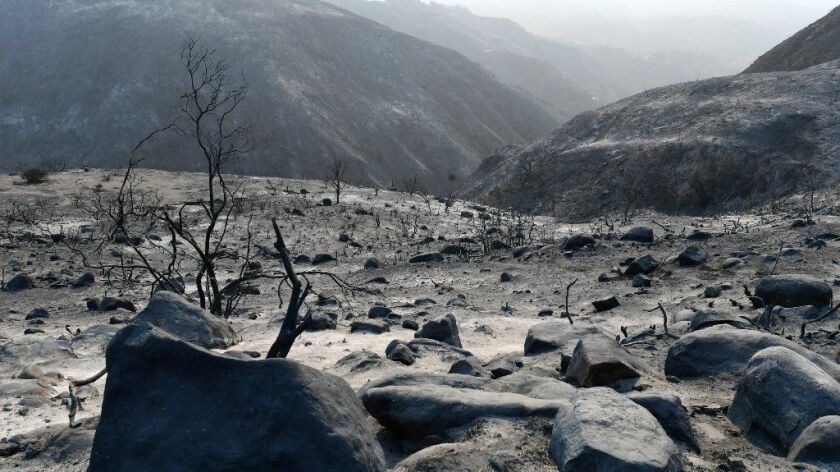 The Thomas fire left behind vast swaths of charred landscape such as this area in the upper Rincon Canyon.