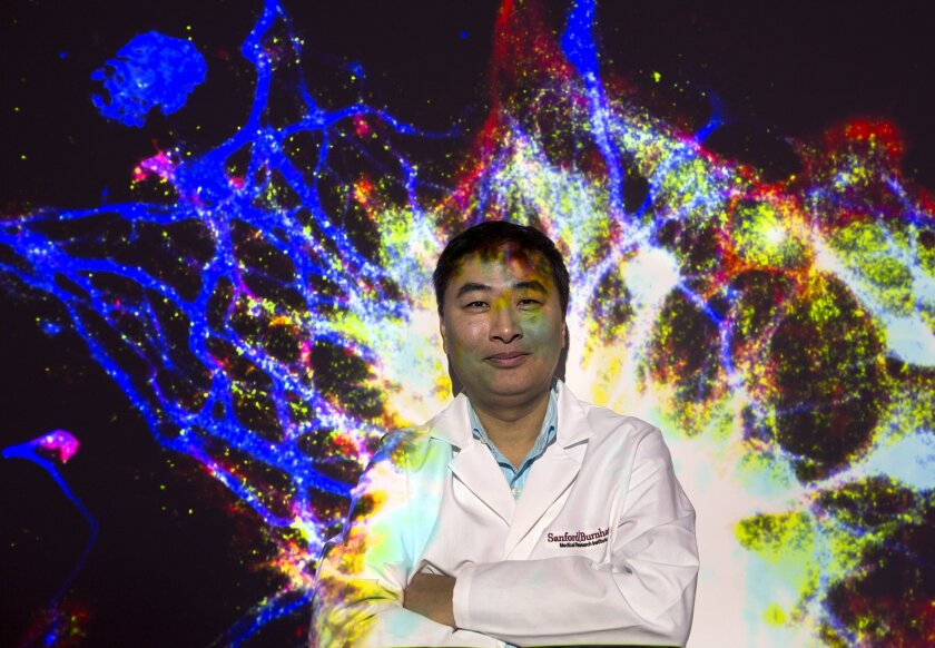 A photo of a neuron is projected on Alzheimer's researcher Huaxi Xu at the Sanford Burnham Prebys Medical Discovery Institute.