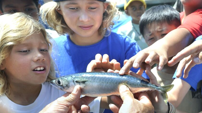 Fishing clinics at Dana Point teach kids how to handle bait