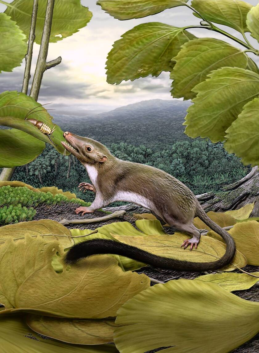 Scientists create hypothetical ancestor of placental mammals