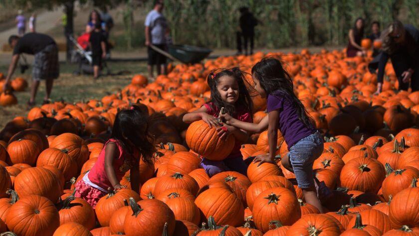 Children pick their perfect pumpkin at Bates Nut Farm in Valley Center.