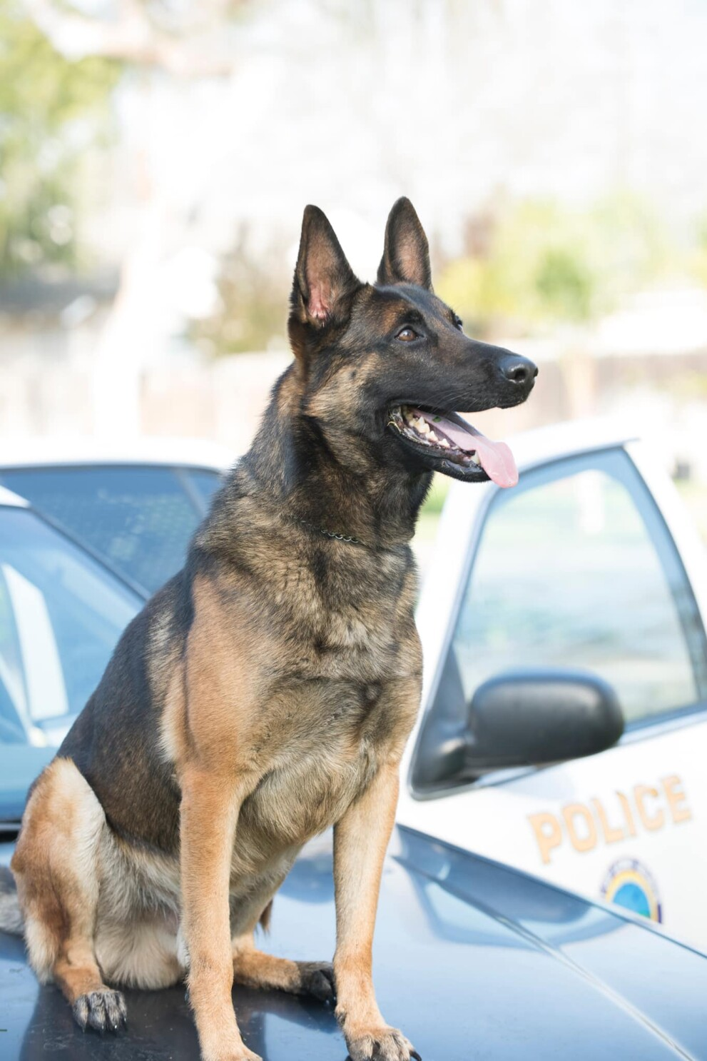 K-9 found dead in Long Beach officer's hot patrol car
