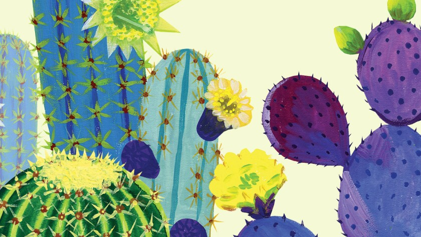 Colorful cactus varieties (from left) Fachiero azul, golden barrel and prickly pear.