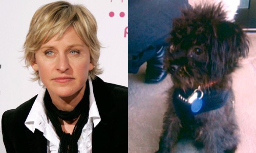 Ellen DeGeneres and Iggy.
