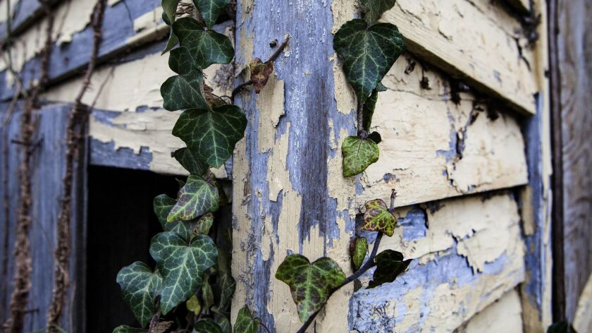 SELMA, AL - MARCH 5, 2015- Paint peels and vines grow on the dilapidated former home of civil rights