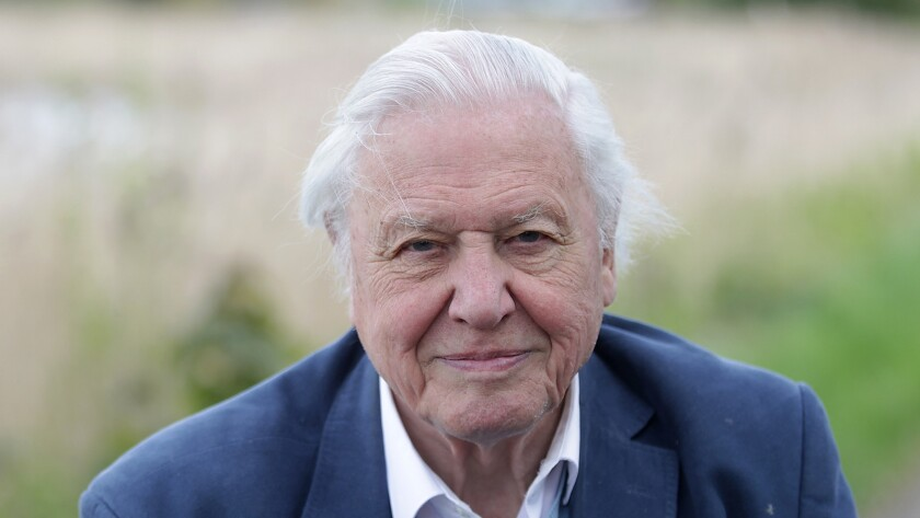 """David Attenborough presents the BBC America series """"Planet Earth: Blue Planet II,"""" airing on multiple channels."""