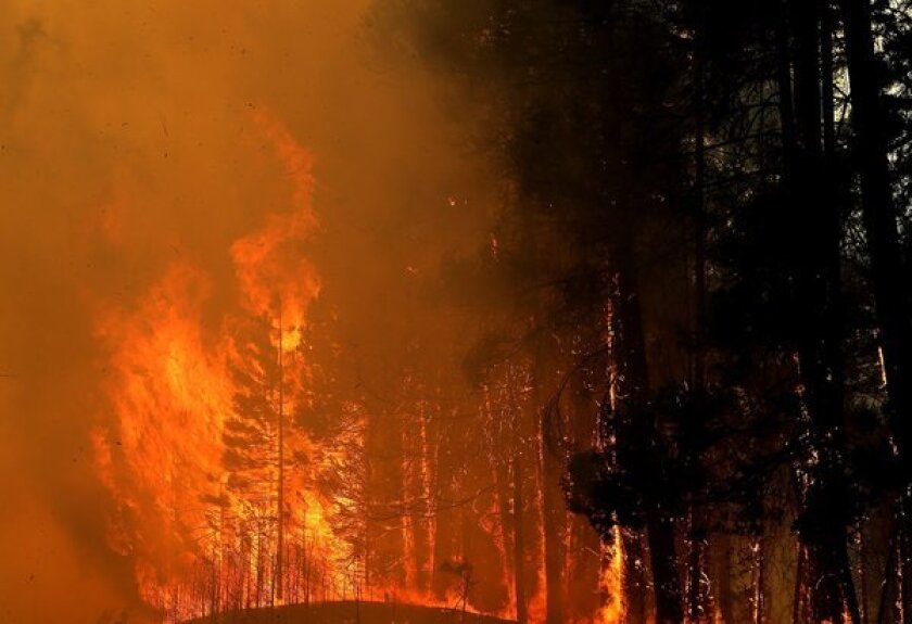 Trees burst into flames along California 120 on Wednesday, as the Rim fire continued to rage out of control.