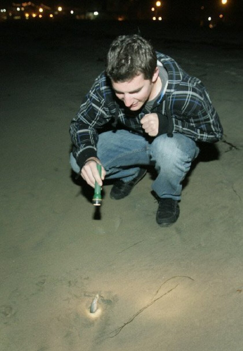 Lanse Iunker of El Cajon watched a female grunion dig her tail in the sand to lay her eggs April 12. (Peggy Peattie / Union-Tribune)
