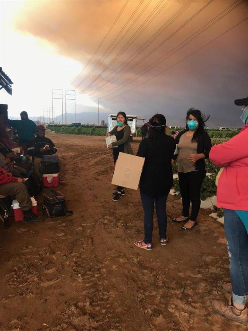 Fotografía sin fecha cedida por Proyecto Mixteco donde aparecen unas trabajadoras de campo recogiendo cajas en frente de una nube de humos de incendio en California (EE.UU.). EFE/Proyecto Mixteco/Indígena Organización Comunitaria (MICOP)