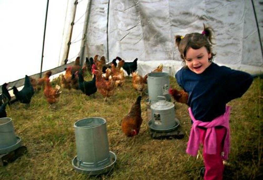 WITH A CLUCK-CLUCK HERE: Evelyn, then 4, plays with the chickens at Willow-Witt Ranch in Ashland, Ore. Fresh eggs are available for purchase.