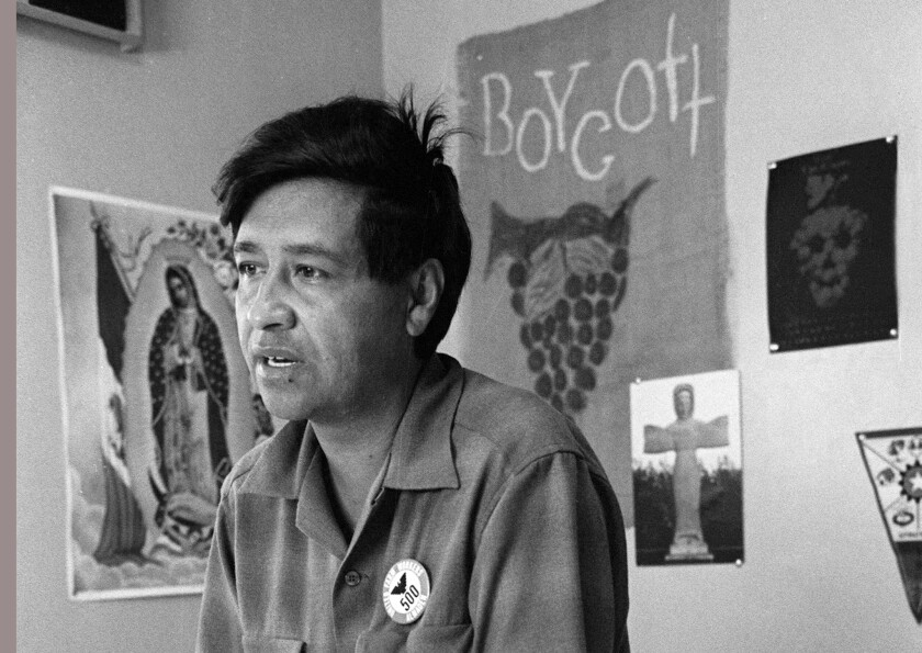 Cesar Chavez, farm worker, labor organizer and leader of the California grape strike, works in a Calif. office in 1965.