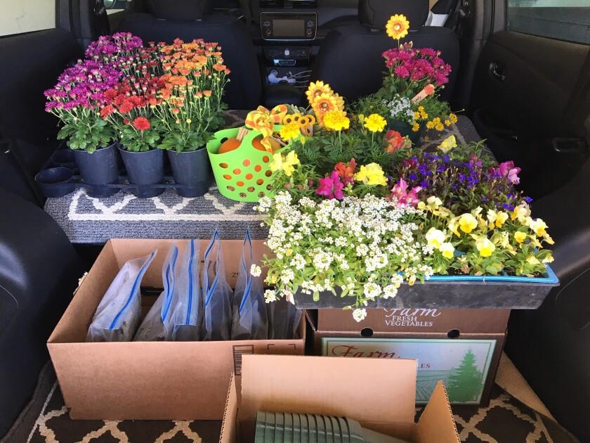 Supplies for a tabletop gardening activity for the Master Gardener Reminiscence Gardening program.