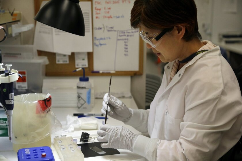 Microbiologist Mi Kang works to identify a strain of E. coli from a specimen in a lab at the Washington State Dept. of Health Tuesday, Nov. 3, 2015, in Shoreline, Wash. Chipotle's industry-leading commitment to tracking its ingredients from farm to table is being put to the test by an E. coli outbr