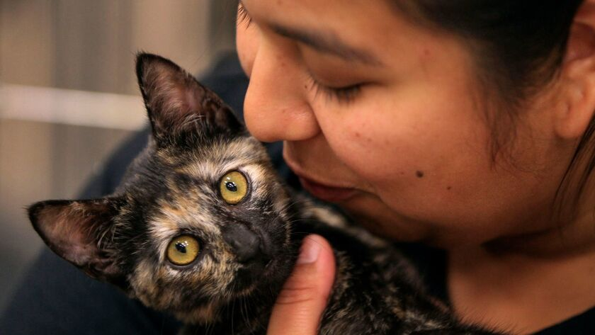 Angela Jimenez kisses her kitten Nami during the San Diego Humane Society's Kitten Kindergarten program In August at the San Diego Humane Society