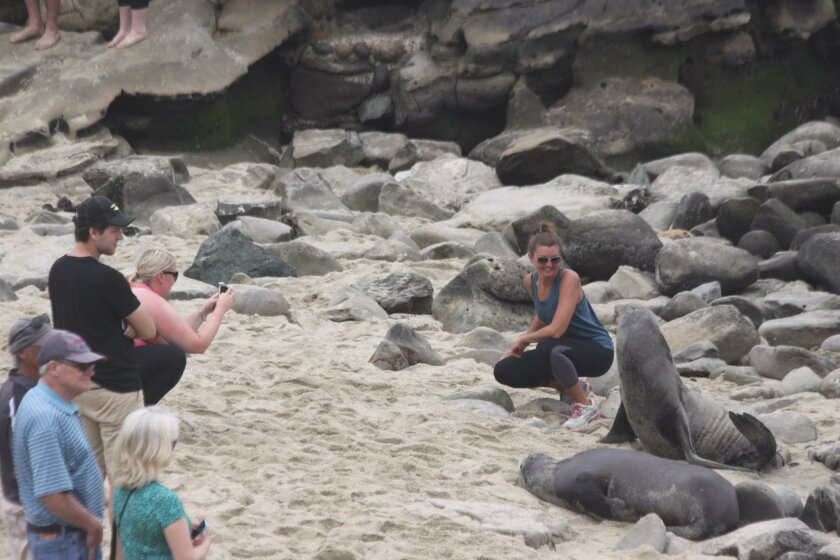 ... the sea lion notices the person's  proximity for the photo ...