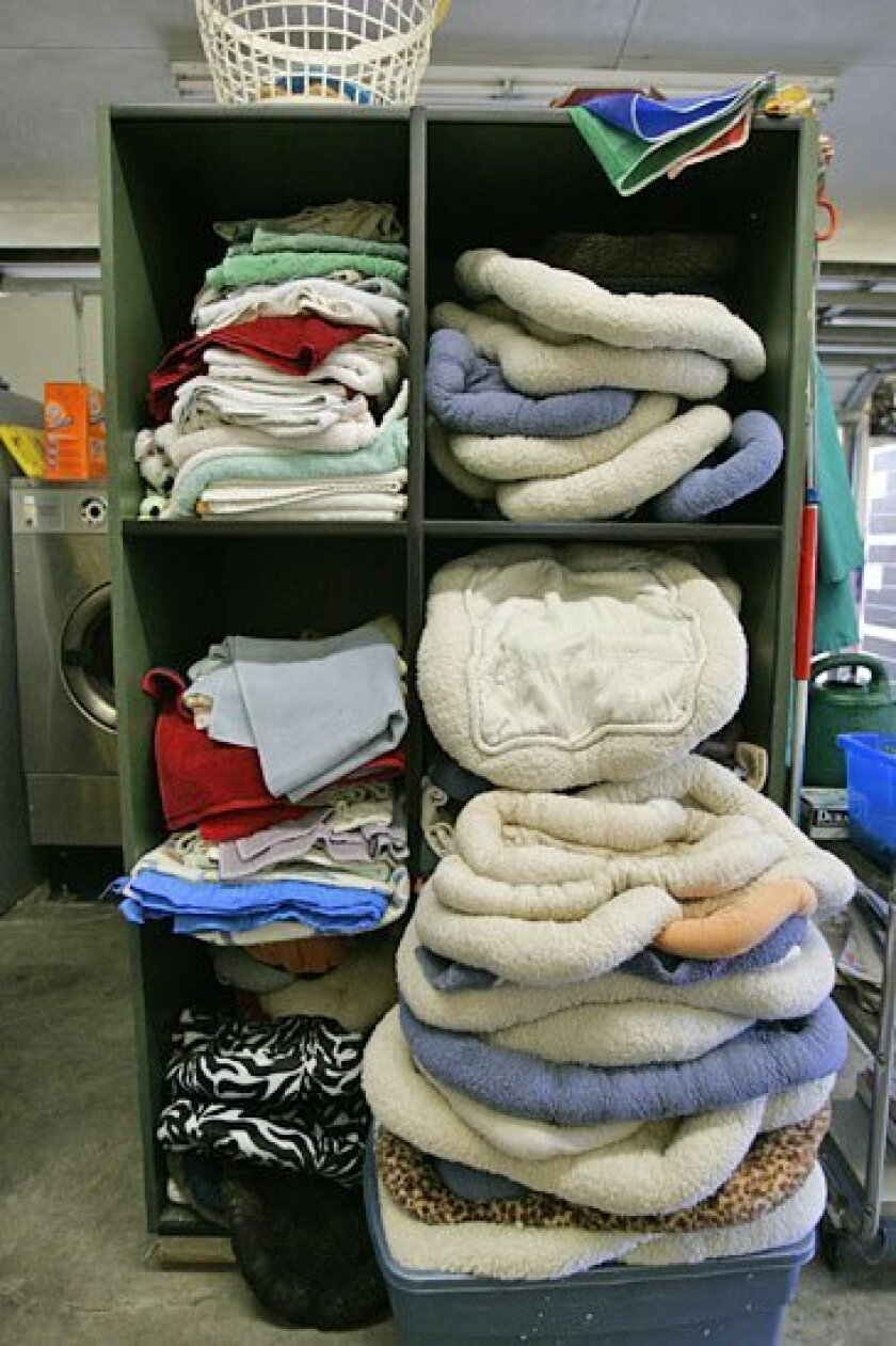 These blankets were donated to the shelter, but officials are seeking more items because of the animal population.