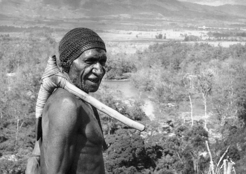 En esta imagen del 20 de febrero de 1962, un viejo guerrero con hacha de piedra sobre su hombro, posa en el Valle Baliem en la cadena montañosa central de Papúa, Nueva Guinea. Una nueva investigación publicada el miércoles 21 de septiembre deja entrever que el ancestro genético de las personas que viven fuera de África se puede rastrear casi por completo a un solo éxodo del continente hace mucho tiempo. Pero algunos isleños nativos de Papúa, Nueva Guinea también podrían llevar un pequeño legado. (AP Foto)