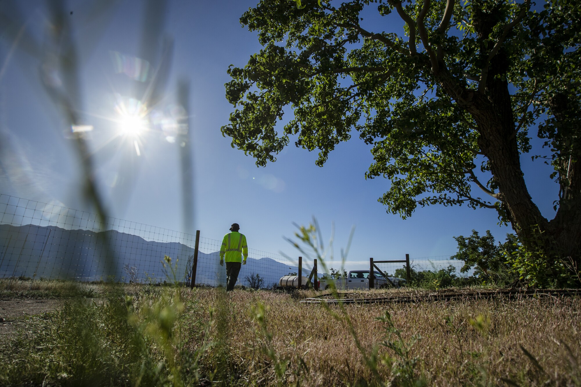 A man walks past a tree toward a work truck on the other side of a wire fence under bright sun with mountains in the distance